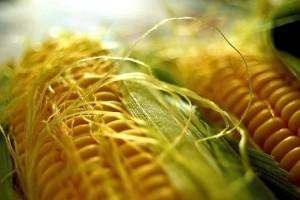 corn0