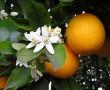 Narancs, a téli egészség kulcsa