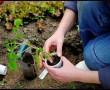 Miért élnek többet a kertészek?