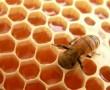 Valóban csodaszer a méhpempő?