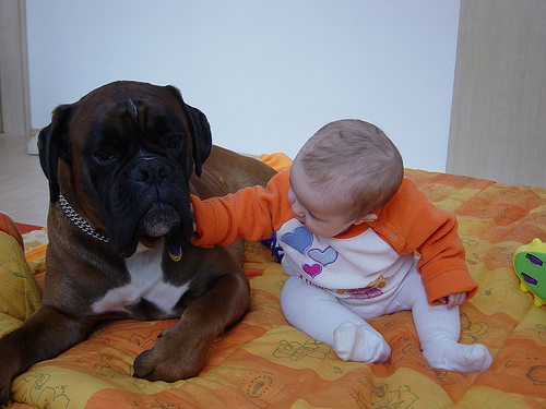 kutya-gyermek