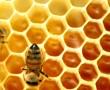 A méhpempő és a propolisz jótékony hatása!