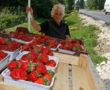 Bevált trükk bogyós gyümölcsök frissen tartására!