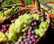 A szőlő táplálkozástani szempontból az egyik legértékesebb gyümölcsünk