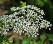 14 gyógynövény, ami ápolja a fájós ízületeket