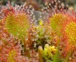 Harmatfű, a gyilkos növény segíthet a sebgyógyulásban