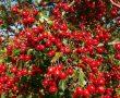 Csökkentése vérnyomását, gyógynövényekkel