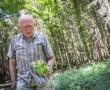 Volt egy rákja, de meggyógyította magát: Gyuri bácsi, a bükki füvesember története