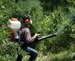 Növényvédő szerekkel terjed az allergia?
