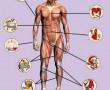Csillagjegyed megmutatja milyen betegségeid lehetnek