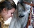 A ló nem csak társ és barát, hanem gyógyító is