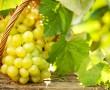 Fogkefe helyett szőlő?!