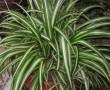 Ezek a legjobb légtisztító szobanövények a NASA szerint