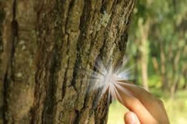 fa-lelki-erő