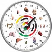 kínai biológiai óra test testrész szerv működés aktív pihen energia maximum minimum-2015-új világtudat