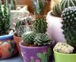 Van otthon kaktuszod? Így kell télen, és egész évben gondozni!