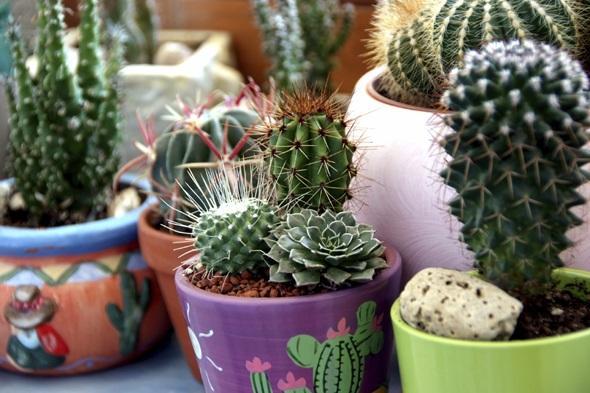 kaktusz-gondozasa-1-size-3