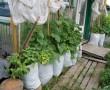 Így termel közel 1000 uborkát 1 négyzetméteren!