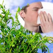 allergy-amb-940x530