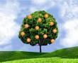 Válassz egy almát erről a fáról, és kiderül, hogy képes vagy-e megvalósítani a céljaidat!