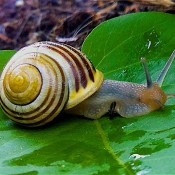 37816458-snail-pictures