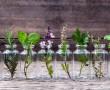 10 növény melyet vízben egész évben termeszthetsz a lakásban!