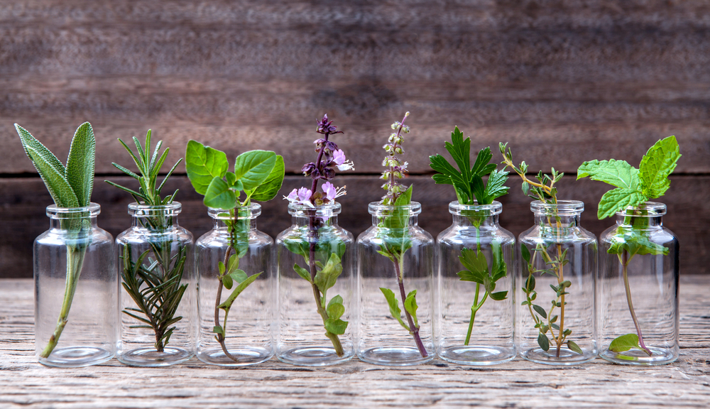 10-noveny-melyet-vizben-egesz-evben-termeszthetsz-a-lakasban