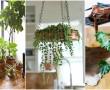 Próbáld ki ezt a módszert, ha azt szeretnéd, hogy szobanövényeid úgy nőjenek mint a bolondgomba!