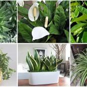 oxygen-plants