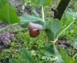 Csigákkal van tele a kerted? Mi a teendő? Megenni, élni hagyni vagy elpusztítani?