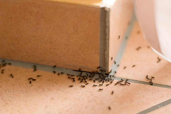 How-To-Get-Rid-of-Ants-In-The-House-Main