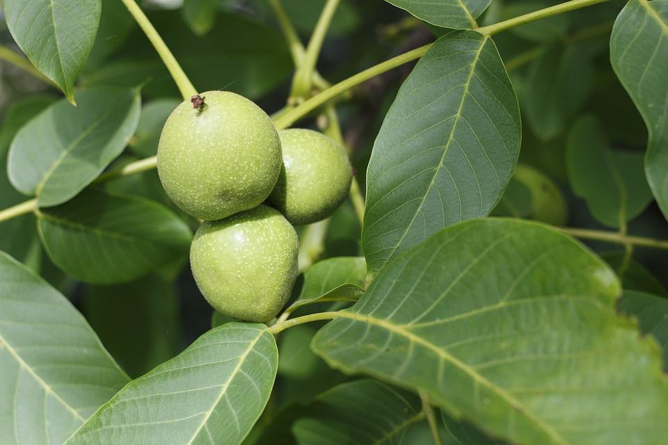 walnut-957785_960_720