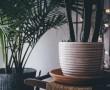 Próbáld ki ezt a 3 egyszerű trükköt, ha szeretnéd, hogy  szobanövényeid erőre kapjanak!