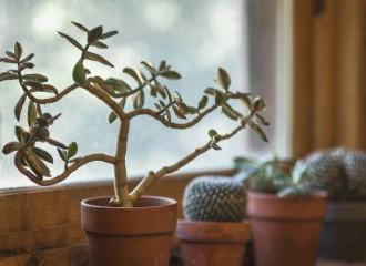 cactus-2556004_960_720