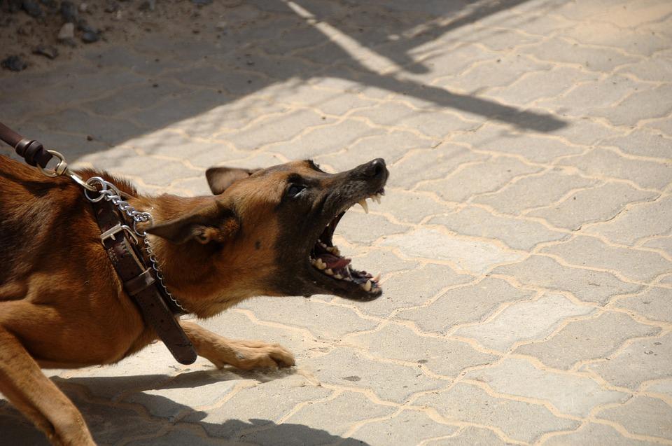 dog-900215_960_720