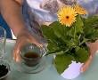 5 természetes táp a szobanövényeink számára, hogy mindig virágozzanak és örömöt hozzanak!