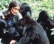 Szörnyű halál vetett véget, a nagy tiszteletnek örvendő Dian Fossey életének :(