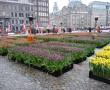 """Hollandiában már kezdődik a """"tavasz""""! Indul a tulipánszezon :)"""