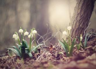 spring-snowflake-1316091_960_720