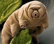 Az elpusztíthatatlan állat ( -200 °C-fok-tól +150 °C-fok-ig, éhezve, víz nélkül, a sivatagban, a tengerek mélyén, vagy akár a világűrben is megél )