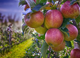 apples-490475_960_720