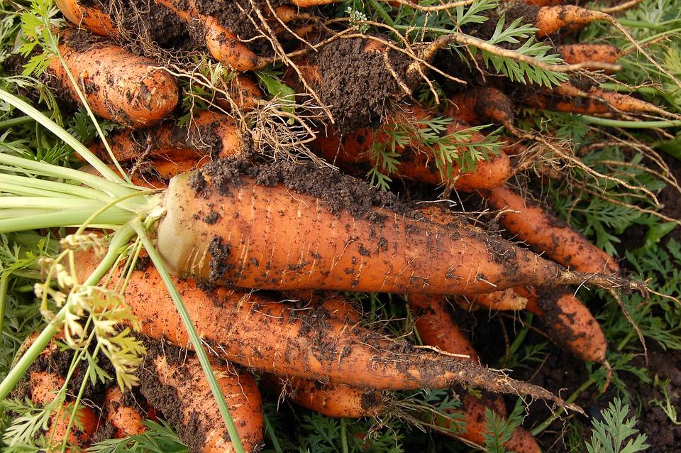 carrot-551661_960_720
