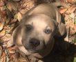 Haláláig védelmezte a hős kutya, a család 2 gyermekét, amikor váratlan megtámadta őket egy….