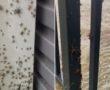 +18 VIDEÓ: Hatalmas pókhordák, menekülő kígyok hatolnak be a házakba Ausztráliában! Menekülnek!!