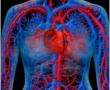 Tisztítsuk meg ereink falát! Normalizáljuk a vérnyomást ,és a vércukrot!