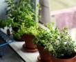 Így hasznosítsuk újra a konyhai növényeket