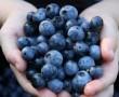 5 ok, hogy fekete áfonyát fogyasszunk