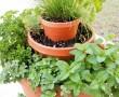"""Építsünk """"fűszertornyot"""", virágcserepekkel, illatos növényekből!"""