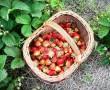 A gyümölcscukor rombolja az agyat, de az Omega-3, itt is segíthet!