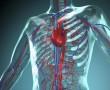 Vérnyomáscsökkentés tejsavóval? – magyar kutató eredményei rangos szakfolyóiratban